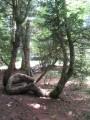 Un arbre étonnant