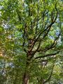 En Forêt de Rambouillet autour de Poigny-la-Forêt