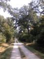 En forêt entre Mailly et Verzenay