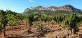 Dans les vignes de Patrimonio