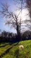 Boucle nature autour de Lignières-la-Carelle