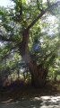 Boucle en forêt de Boulogne depuis Neuvy
