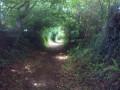 Les chemins creux de La Dorée