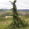 En passant par le Puy de Lavelle depuis la Couze Pavin