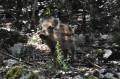 À l'ombre des bois au départ de Seillons-Source-d'Argens