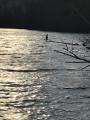 Un oiseau en train de pêcher