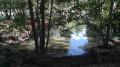 Ce cours d'eau alimente l'étang de la Roche