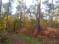 Un petit sentier dans une ambiance d'automne