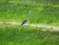 Un représentant des oiseaux du marais