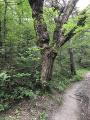Forêt des roures