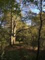 Maisons à pans de bois, étangs, forêts et moulin à vent autour de Dosches
