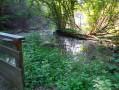 Promenade dans l'ancien lit du Rhin 4 : autour du Petit Rhin