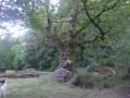 Boucle de Clédat par Chadebec et le Menhir du Pilard