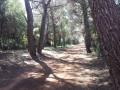 Une allée dans la forêt