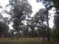 Une belle forêt de chênes