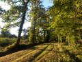 Une belle forêt de feullus