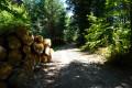 Une bonne partie de la randonnée se fait en forêt