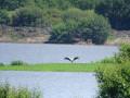 Une cigogne au loin