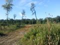 Une clairière où les arbres repousseront bien vite
