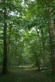 Forêt de Macey