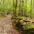 Découverte des hameaux du Haut-Morvan par les routes forestières