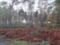 Une forêt de résineux