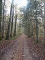 Une forêt mixte