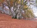 Le Tucou, le Monné, le Pic de Labassère