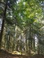une magnifique forêt