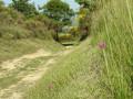 Une orchidée monte la garde sur le chemin
