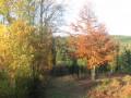 Une partie très vallonée de la forêt de Montfort