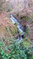 Une petite cascade en forêt