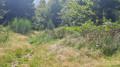 une petite clairière en pleine Forêt.