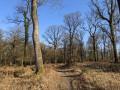 Forêt de Rennes - Le grand circuit de la Caleuvre
