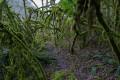 Une végétation verdoyante