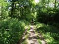 Upper Beeding circular - woodland just beyond Tottington Farm
