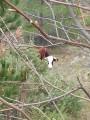 Vache en liberté