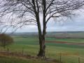 Grandcourt - Massif de la haute Forêt d'Eu