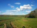 Vallée de la Sueurre, entre taillis et plaine