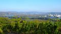 Boucles des vignes et vergers au départ de Saint-Pierre-de-Bœuf