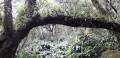Végétation Réserve de Matarun