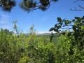 La forêt domaniale de Sault