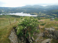 View over Windermere and Western Fells from Wansfell Pike