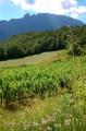 Sentier découverte autour des Lacs de Chevelu