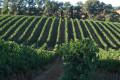 Vignes autour de Lagardère