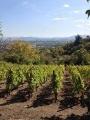Vignes de Châteaugay