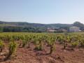 Sentier des vignerons et boucle des cépages à Saint-Julien