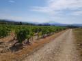 Entre forêts et vignes au départ du Col de Viarès