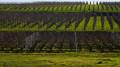 Boucle de Martillac par les châteaux viticoles