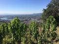 Belvédères et vignobles de Tain-l'Hermitage